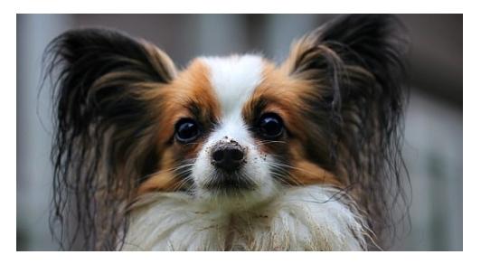 Kutya kvíz – felismered a népszerű fajtákat?