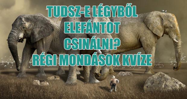 elefánt kvíz